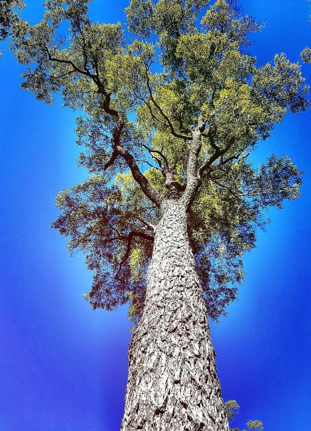Ooline Tree (2)